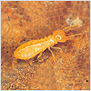 insect-img1-on